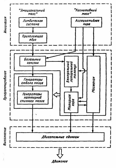 Понятие функционального состояния (ФС) широко используется в психологии, физиологии, эргономике и т. д. Это...