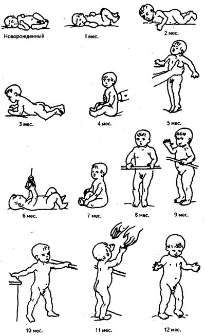 Рис. 9. Динамика развития двигательных функций ребенка (норма).  Для детей с ДЦП характерно сильное отставание в...