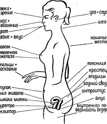 Эрогенные зоны.  Подготовительный период полового акта.