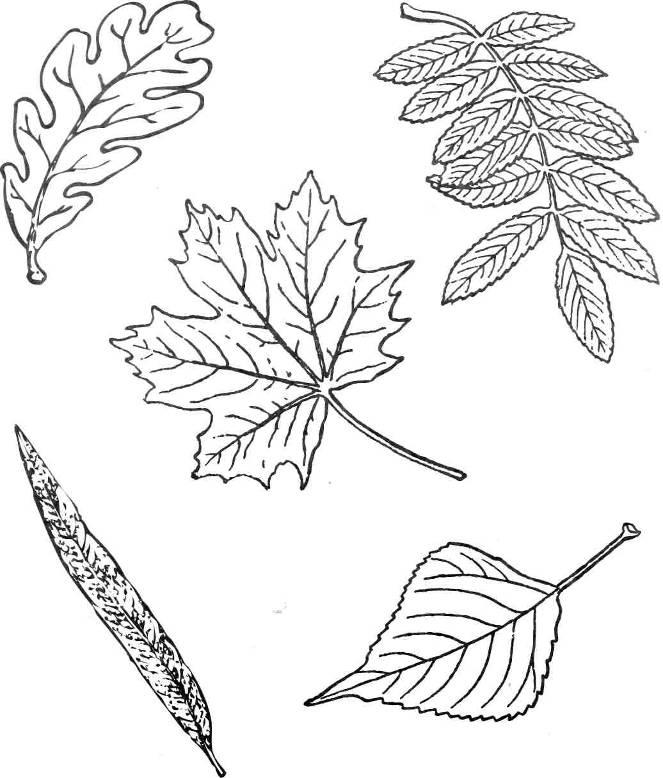 Раскраски деревья и листья деревьев - Сайт родителей Мариуполя Но в том же Хаусе - с удовольствием читаю...