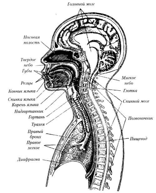Анализатор слуховых аппаратов